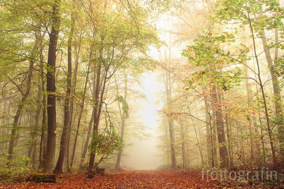 Wald Landschaft Fotografie Saarland fotogräfin