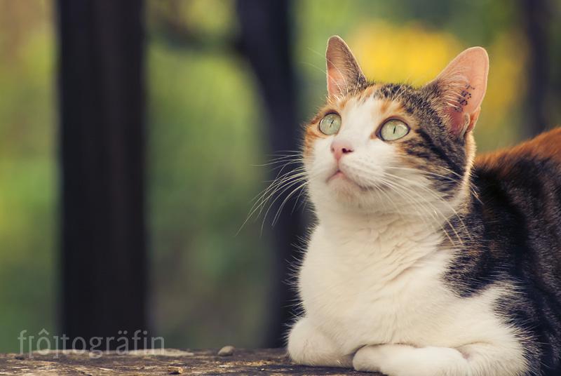 Katzen-Shooting Saarland fotogräfin